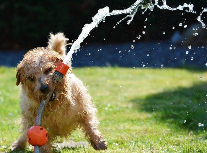 Haftpflichtschäden, die durch den Hund entstehen können