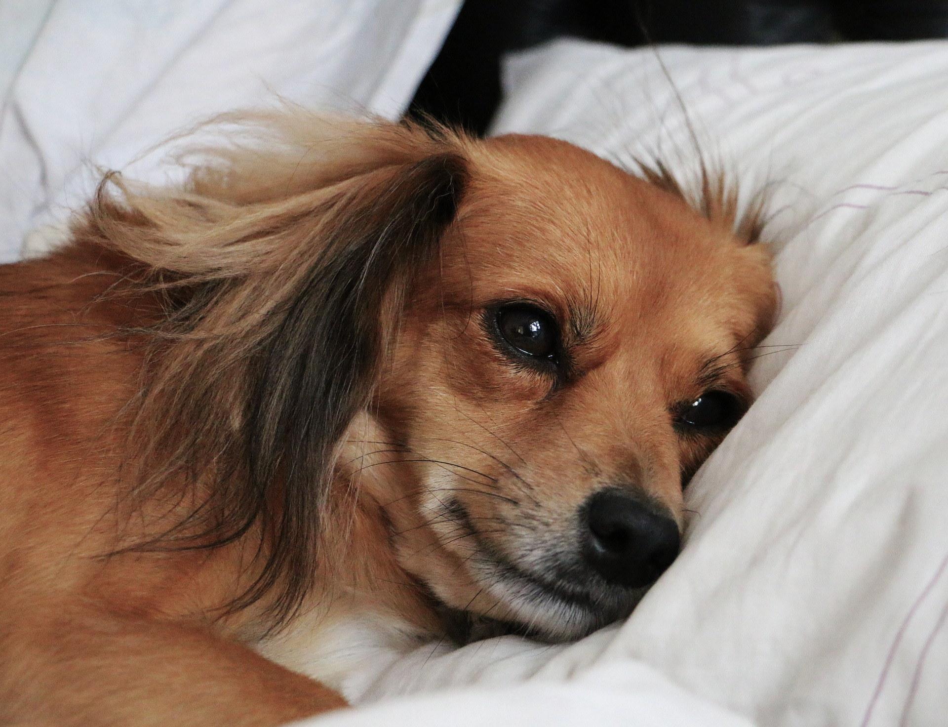 der hunde ratgeber darf der hund im bett schlafen schwerin lokal. Black Bedroom Furniture Sets. Home Design Ideas