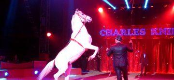 Diskussion um Wildtierverbot und Löwenangriff begleitet Zirkusgastspiel