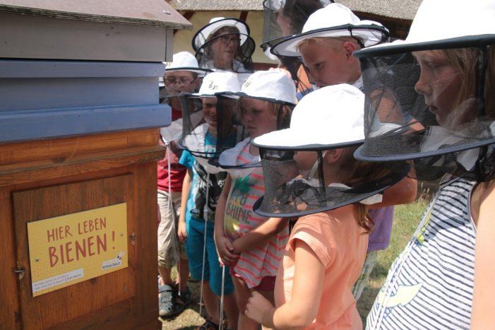 Expedition zu den Mueßer Bienenvölkern