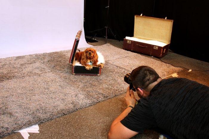 Hundemesse in der Kongresshalle: Alles rund um Vierbeiner