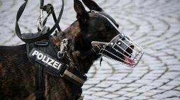 Fährtensuchhund und Polizei finden Vermissten