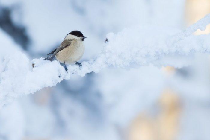 Futterküche für Wildvögel
